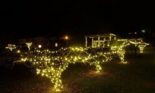 christmas lights in vineyard set up for Bottleneck Drive in Summerland BC Light up the vines event